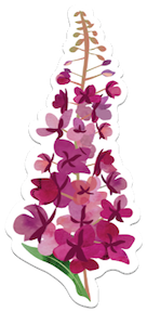 6 Inch Fireweed Vinyl Sticker