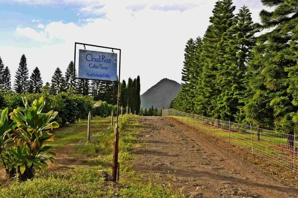Ka'u Coffee: History, Tasting Notes & Terroir