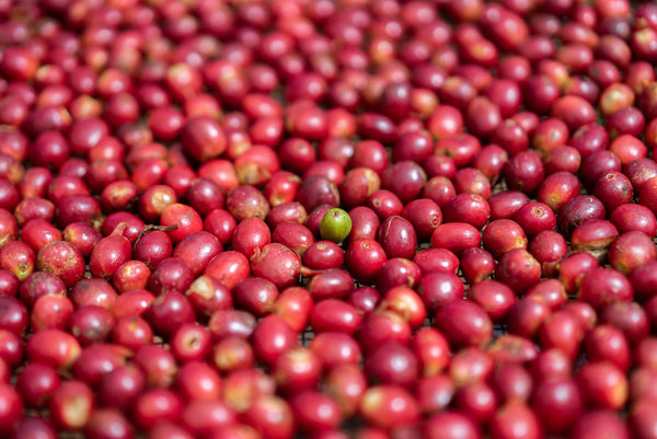 Coffee Story: Single Estate Ka'u Coffee from Alla & Rus