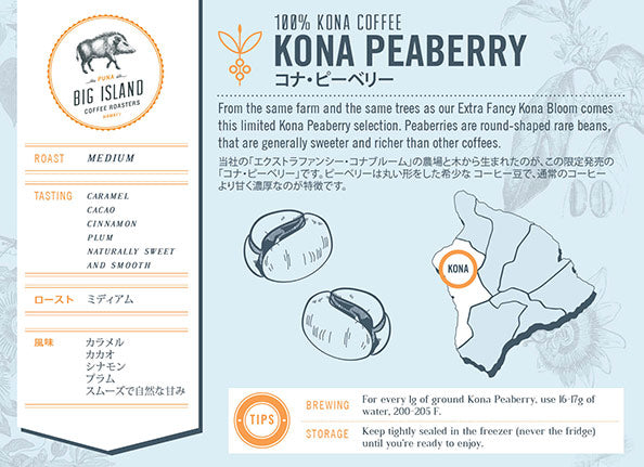 Kona Peaberry Coffee Infograph