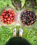 natural process kau coffee hawaiian coffee