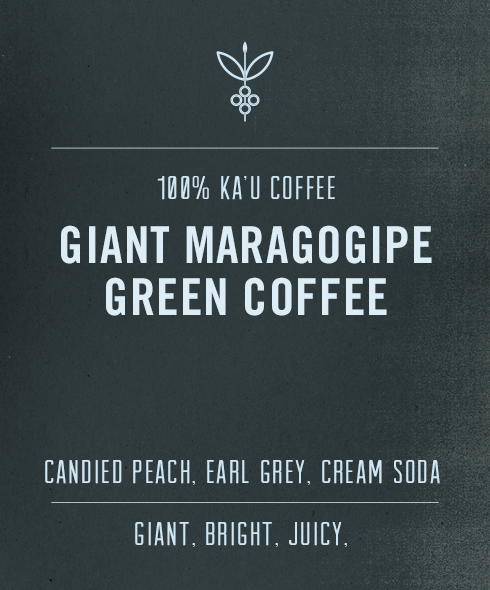 Big Island Coffee Roasters Green Hawaiian Coffee Green Ka'u Maragogipe | Giant Elephant Bean 100% Maragogipe from Hawaii | Green Hawaiian Coffee