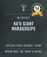 Best Ka'u Coffee | Maragogipe from Ka'u and Coffee Review