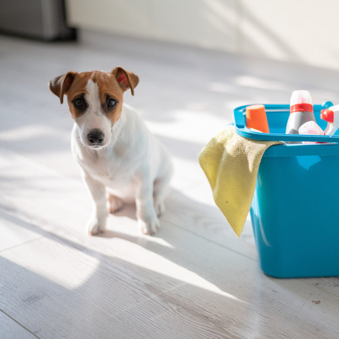 How to keep your pets safe around cleaning products