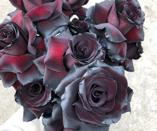 All about the Black Rose