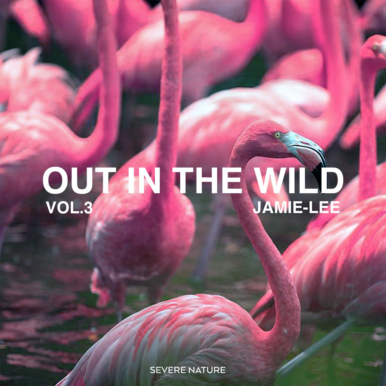 Out In The Wild Vol. 3 Cuated by Jamie-Lee