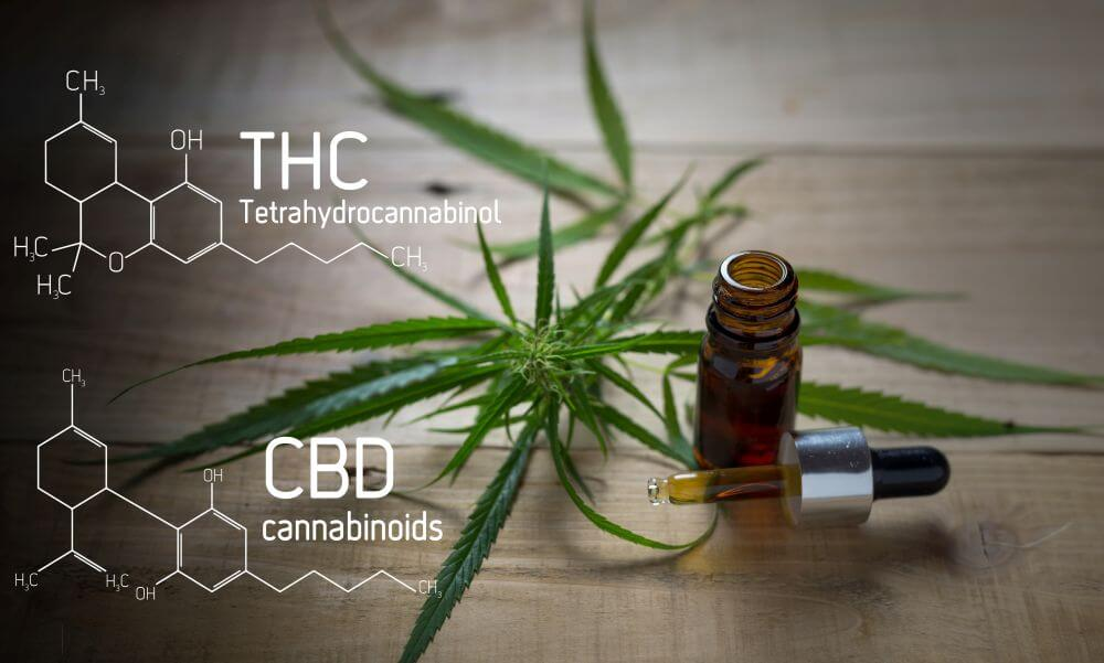 CBD vs THC - The Difference Between Cannabidiol & Tetrahydrocannabinol