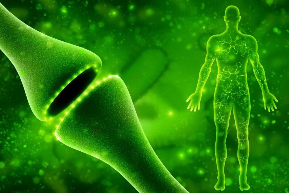 What is the role of the endocannabinoid system? An Easy Overview!