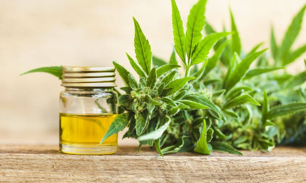 What Is CBG Oil? The Complete Guide to Benefits, Uses & More