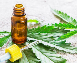 What is CBD Oil Good For? - What is cannabidiol (CBD) oil Explained