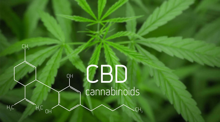 what you need to know before buying cbd