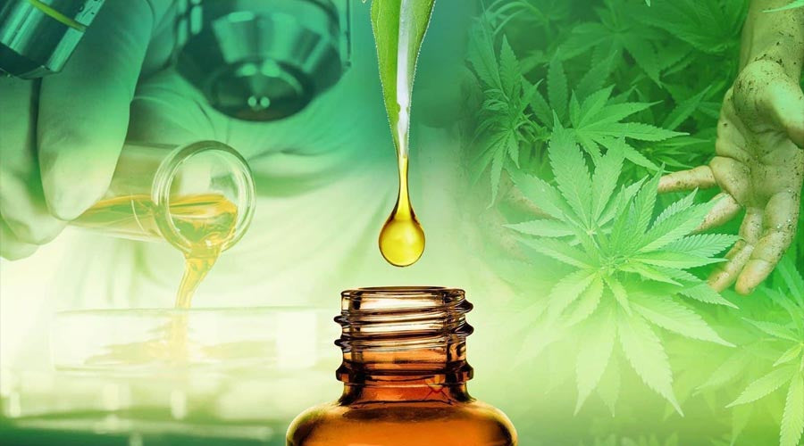 cbd and endocannabinoid