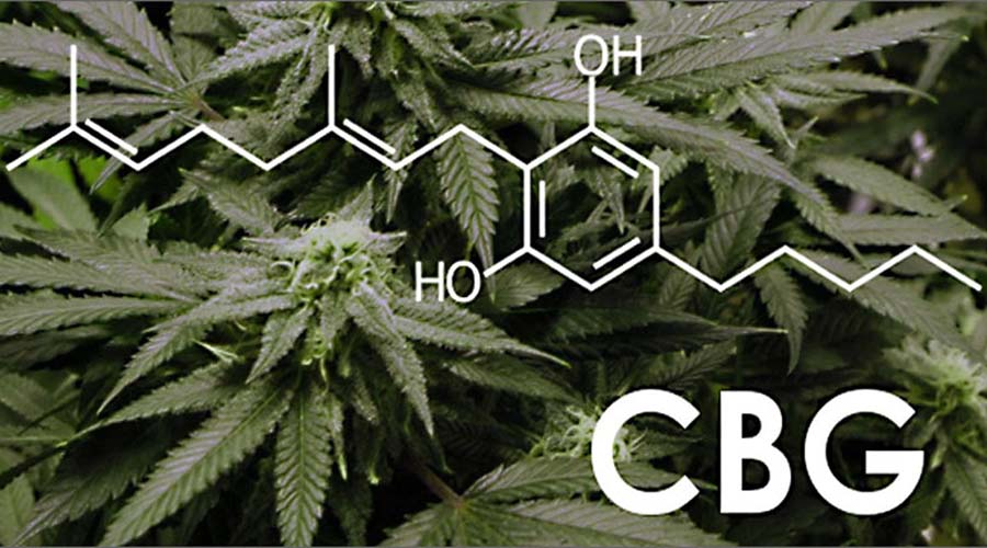 WHAT ADDITIONAL BENEFITS DOES CBD OFFER?