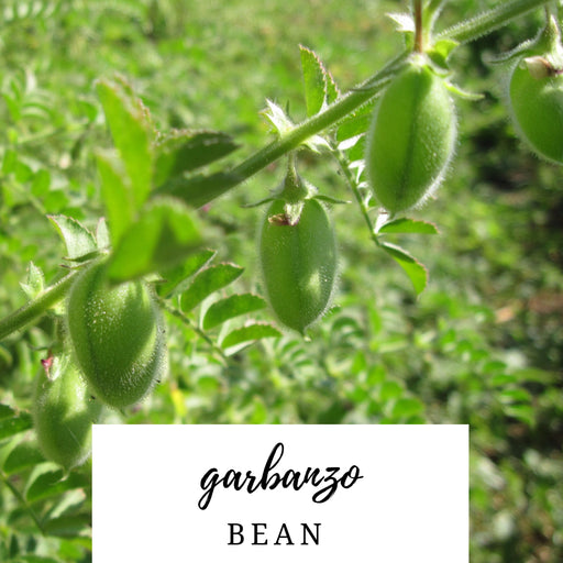 Garbanzo Bean Heirloom Seed Packet