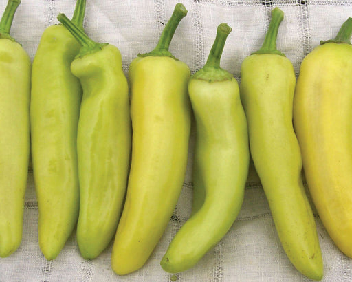 Hungarian Yellow Wax Hot Pepper Heirloom Seed Packet
