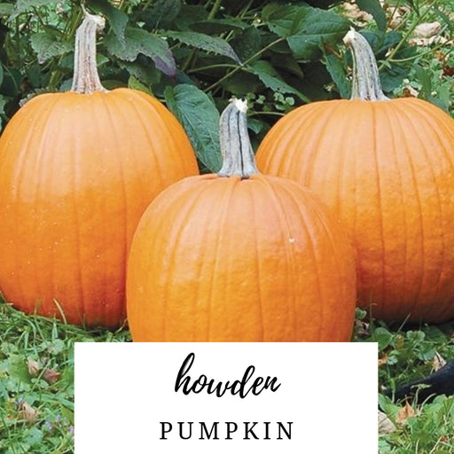 Howden Pumpkin Heirloom Seed Packet