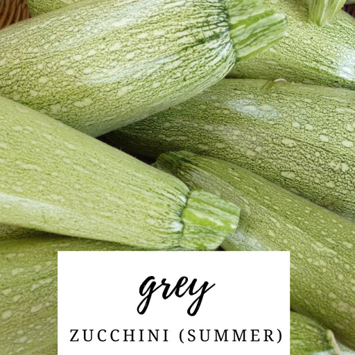 Grey Zucchini (Summer) Heirloom Seed Packet