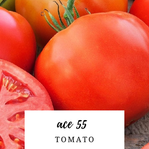 Ace 55 Tomato Heirloom Seed Packet