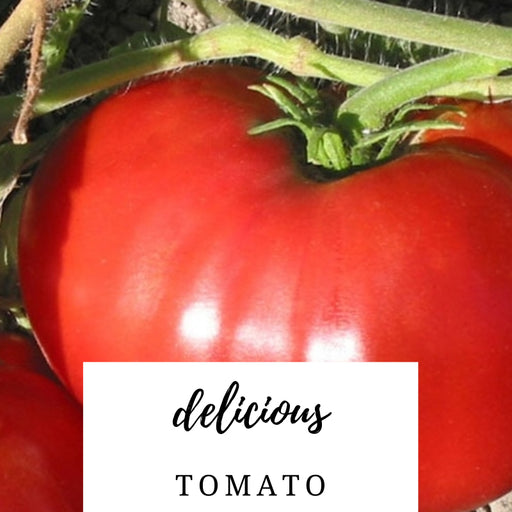 Delicious Tomato Heirloom Seed Packet