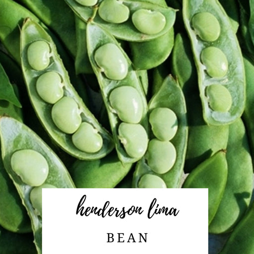 Henderson Lima Bean Heirloom Seed Packet