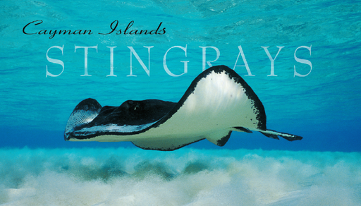 Cayman Islands Magnet with Stingray. Stingray City, Cayman Islands. Grand Cayman Magnet. Cayman Islands Christmas gifts. Cayman Islands Stocking Stuffer. Stingray City gift.