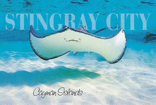 BULK Min 300pcs Mr. Stingray