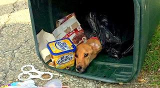 Rescued Dog is found in trash