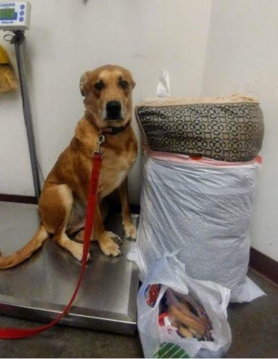 Dog was left in the shelter with all his toys, one photo changed everything!