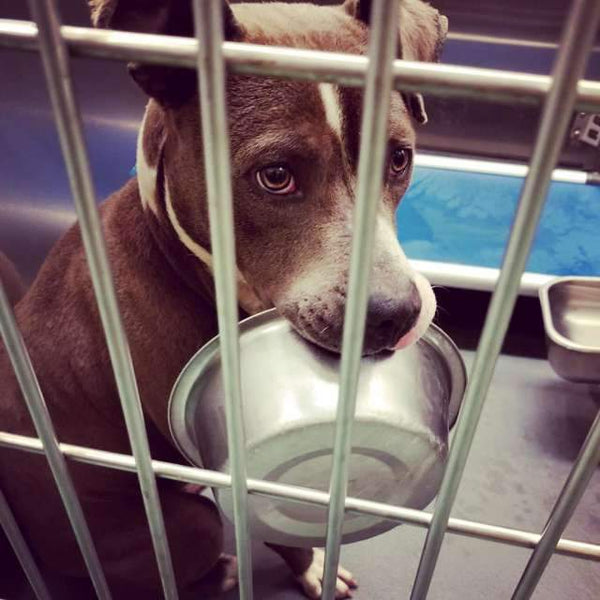 Shelter Dog Refuses To Be Adopted Without His Food Bowl