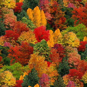 309 MULTI - Landscape Medley Trees Fall Autumn