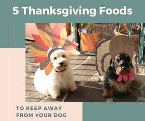 5 Thanksgiving Foods to Keep Away From Your Dog