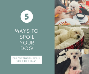 5 Ways To Spoil Your Dog On National Spoil Your Dog Day (August 10th)