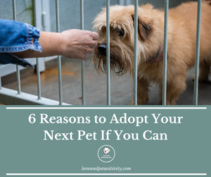 6 Reasons to Adopt Your Next Pet If You Can