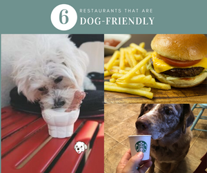 6 Dog Friendly Restaurants + Tips and Resources to find more