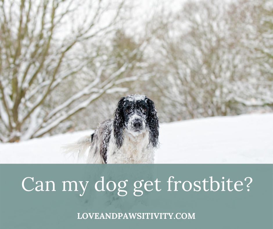 Can my dog get frostbite?