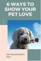 6 ways to show your Dog or Cat you love them for Valentine's Day