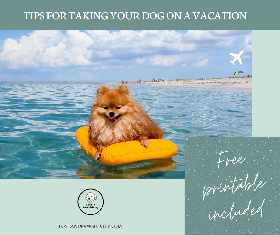 Tips for Taking Your Dog on a Vacation (FREE Printable Checklist Included)