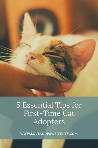 5 Essential Tips for First-Time Cat Adopters