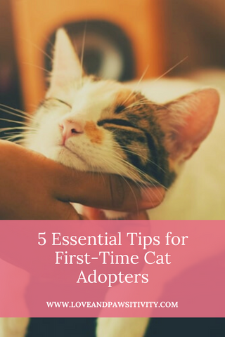 What to do when adopting a cat