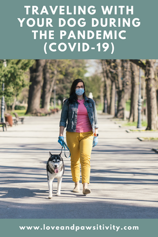 Traveling With Your Dog During the Pandemic (COVID-19)
