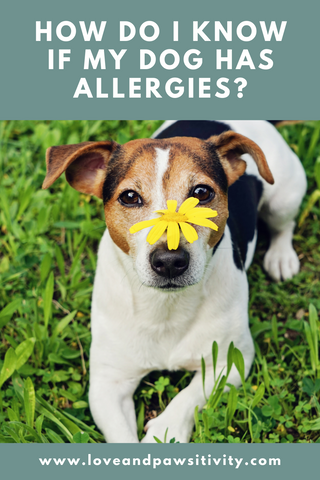 Dog Allergy Symptoms and Treatment