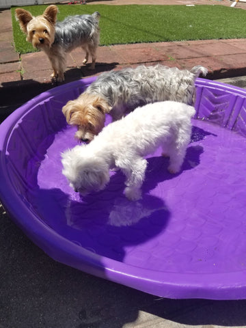Set up a small pool for your dogs this summer