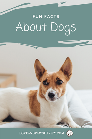 Fun and Interesting Facts About Dogs