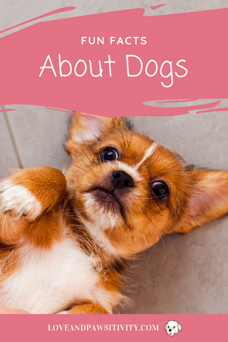 Fun and Unique Facts About Dogs