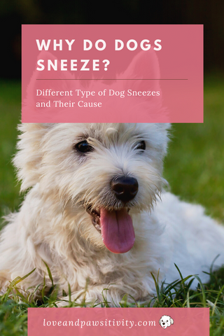 Why Do Dogs Sneeze?