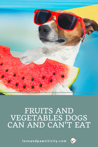 Fruits and Vegetables Dogs Can and Can't Eat