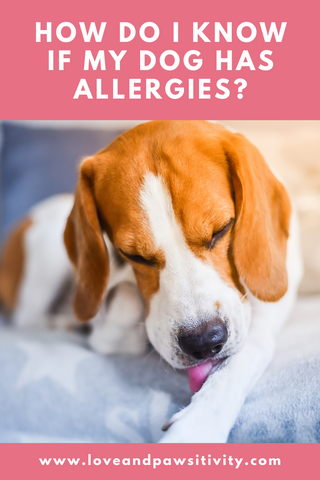 Types of dog allergies