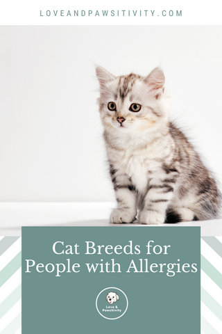 Cat Breeds for People With Allergies