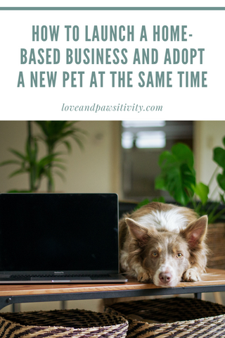How to Launch a Home-Based Business and Adopt a New Pet at the Same Time