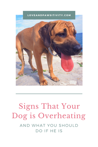 What You Should Do If My Dog is Overheating